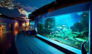 Istanbul Aquarium